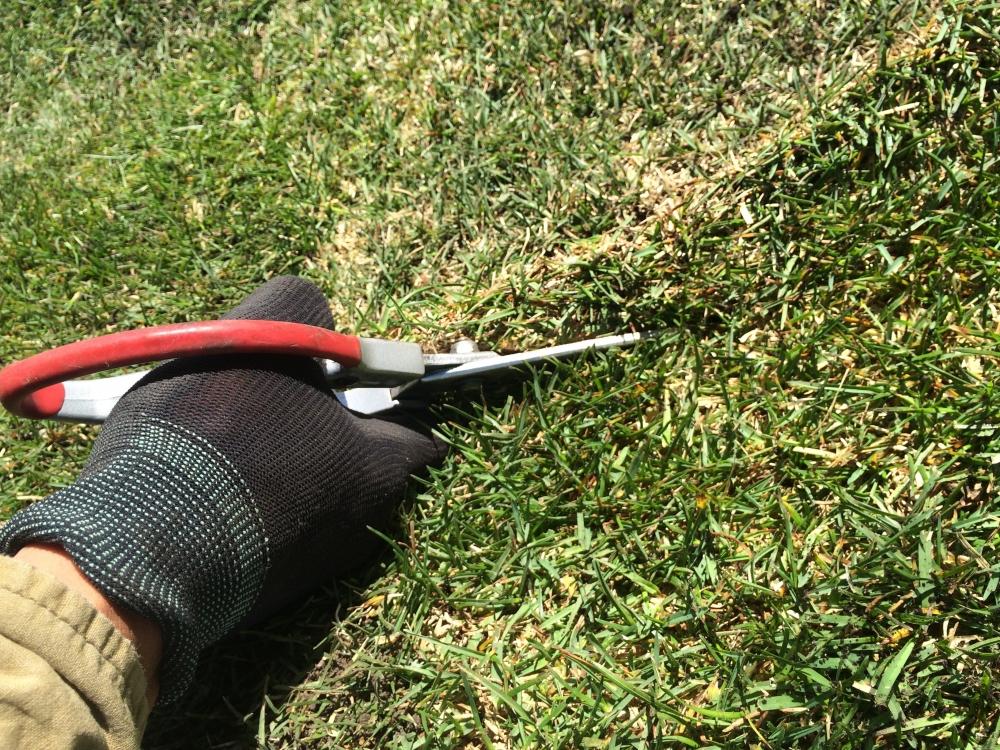 芝生にしよう♪ -