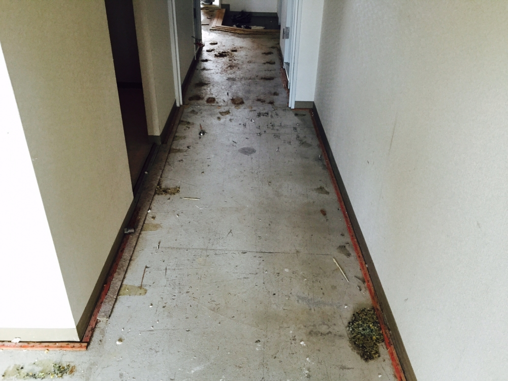 解体 - 床のカーペットをはがすとコンクリートスラブがあらわしになりました。 -  -
