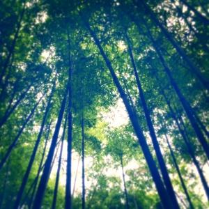 札幌に竹林を!! -