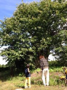 秋。シンボルになりそうな大きな栗の木。