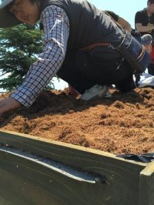 繊維質の、よく保水する土をのせました。