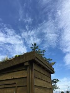 屋根の植物もともに成長していく、そんな小屋です。