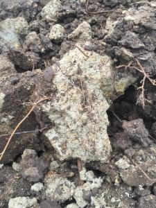 1日目。まずは粘土を掘ります。一緒に仕事をしている小山さんとひたすら掘る!
