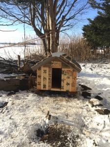 小さくなった小屋をずらして、定位置に置きました。