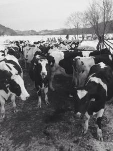 タカラ牧場の「幸せな牛のミルク」