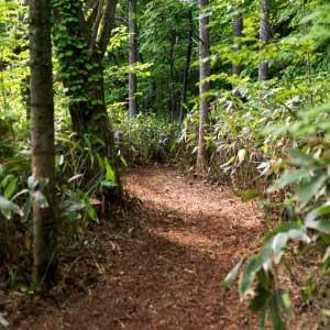 飛生の森公開 - <9 〜 14日>入場無料2011年にスタートした「飛生の森づくりプロジェクト」。今年は飛生の神話(ストーリー)にもとづき、森の中にいくつかの造形物が出現します!森の散策路を歩きながらお楽しみ下さい。