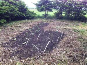 先週裏の原っぱを掘って種をまいたところ。