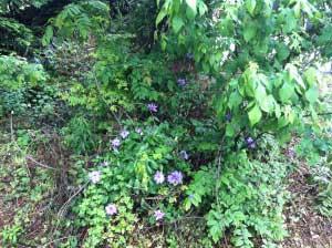 元々、いろいろな植物があるのだけれど、名前がわからず.これから勉強。