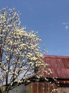 とものいえ2014ほんとの春がやっときた!編