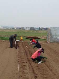 畑もはじまります。母の同級生が今年も助っ人に。ビニールハウスもできた!