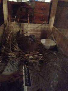 畑で山鳩を保護したのも夏でした。